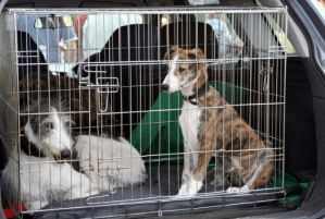 dogs inside a car dog crate