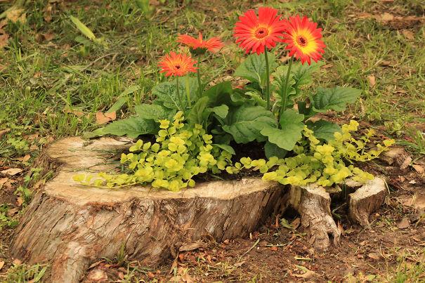 fiorieregiardinotroncoalbero16  KEBLOG