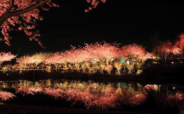 In Giappone  arrivata la primavera bellissime foto di