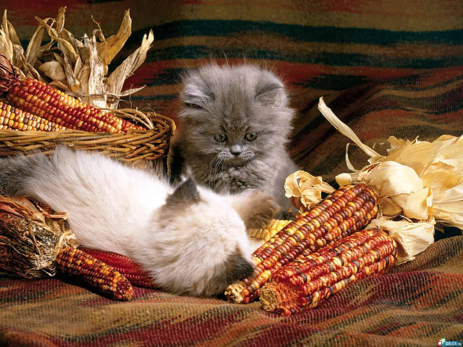 kedi ev yemegi