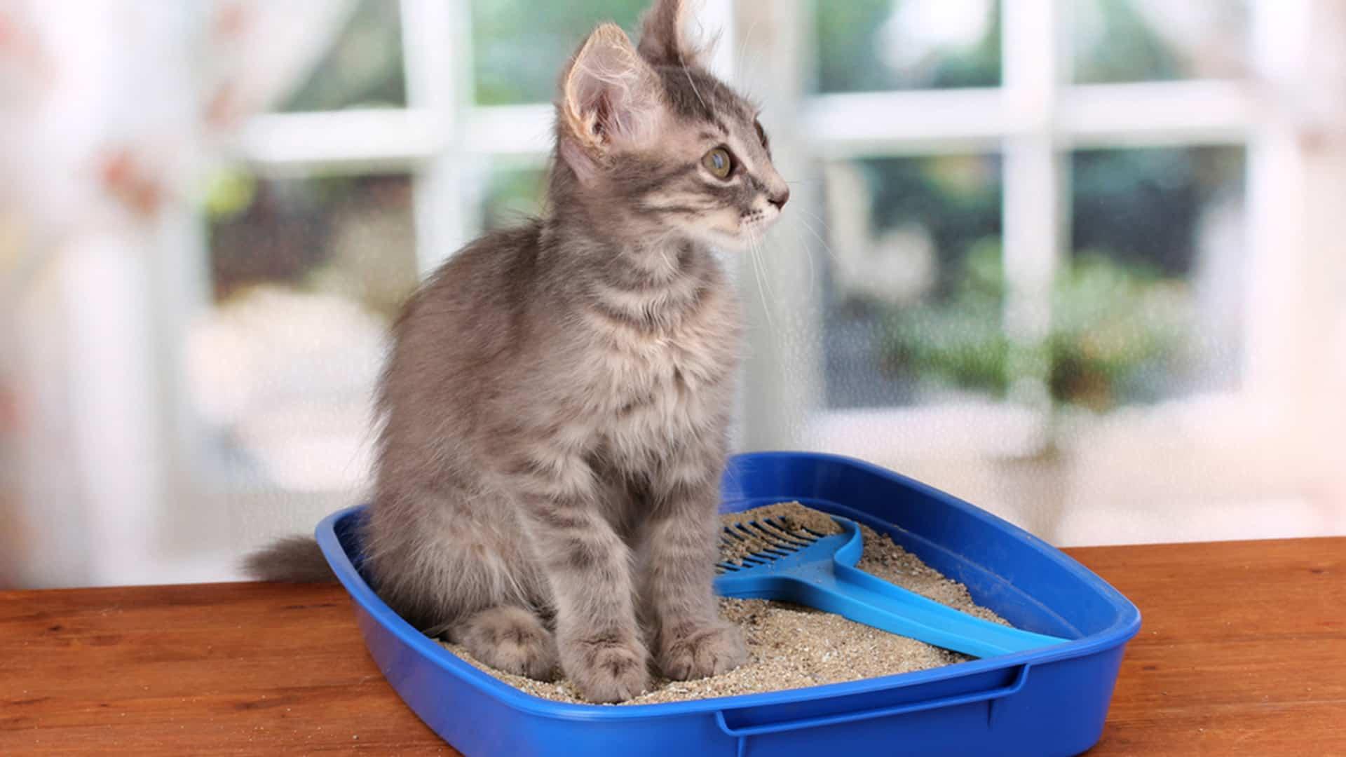 kedi kum kabı