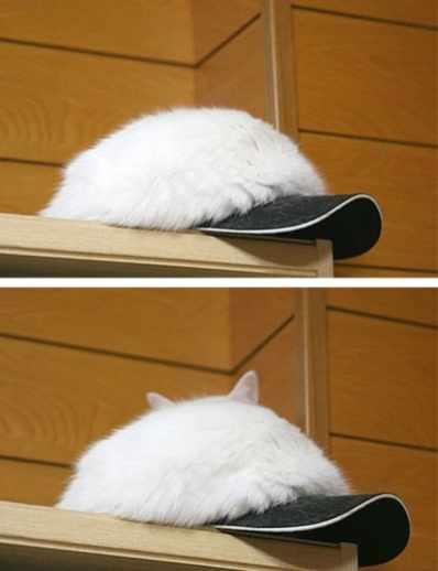 sapkali kedi