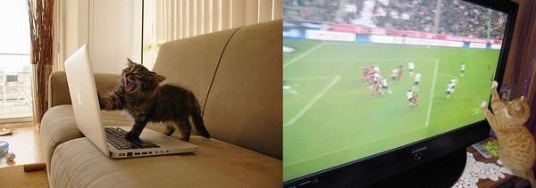 Laptop'a değil, televizyon ekranına pati atardık