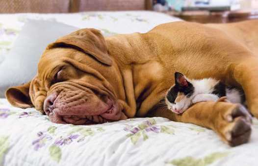 cute-cats-sleeping-on-dogs-22__605