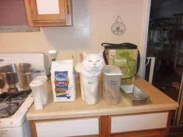 funny-cats-if-it-fits-i-sits-16