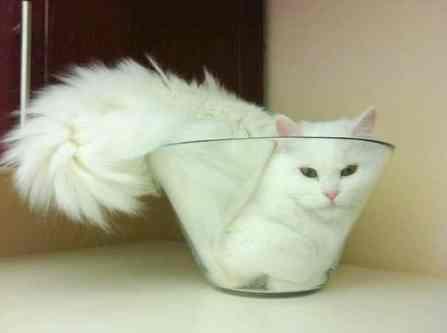 funny-cats-if-it-fits-i-sits-21