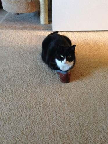 funny-cats-if-it-fits-i-sits-9