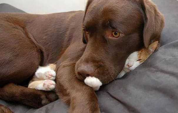 funny-sleeping-cats-14