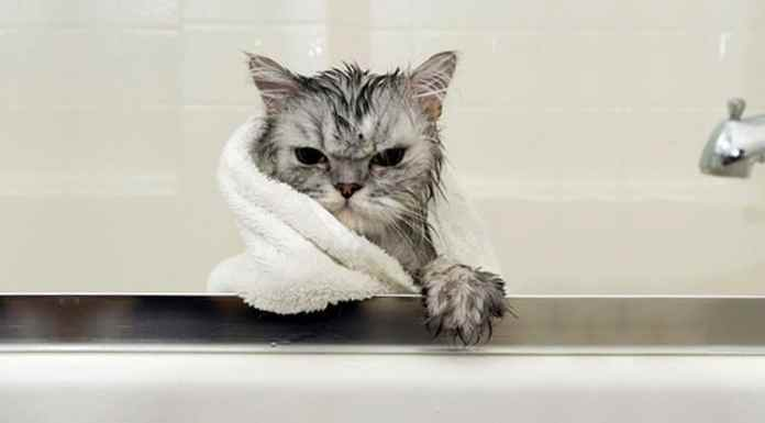 funny-wet-cats-37
