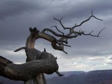 Gnarled_Tree_by_Sango_neko