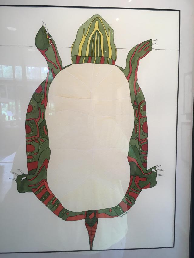drawing of a painted turtle's bottom shell