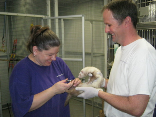 aaron-and-katy-and-ferret