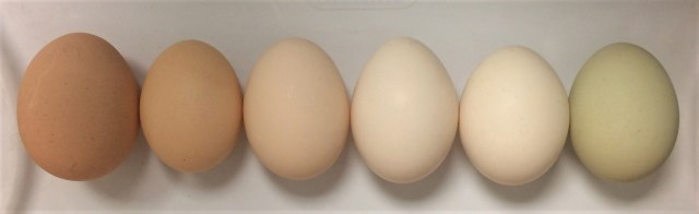 6 chicken eggs lined up from brown to white to green