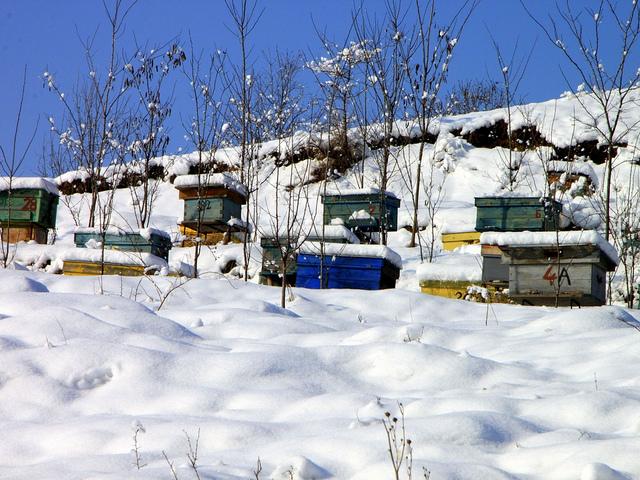 10 Reasons Beehives Die in the Winter Keeping Backyard Bees