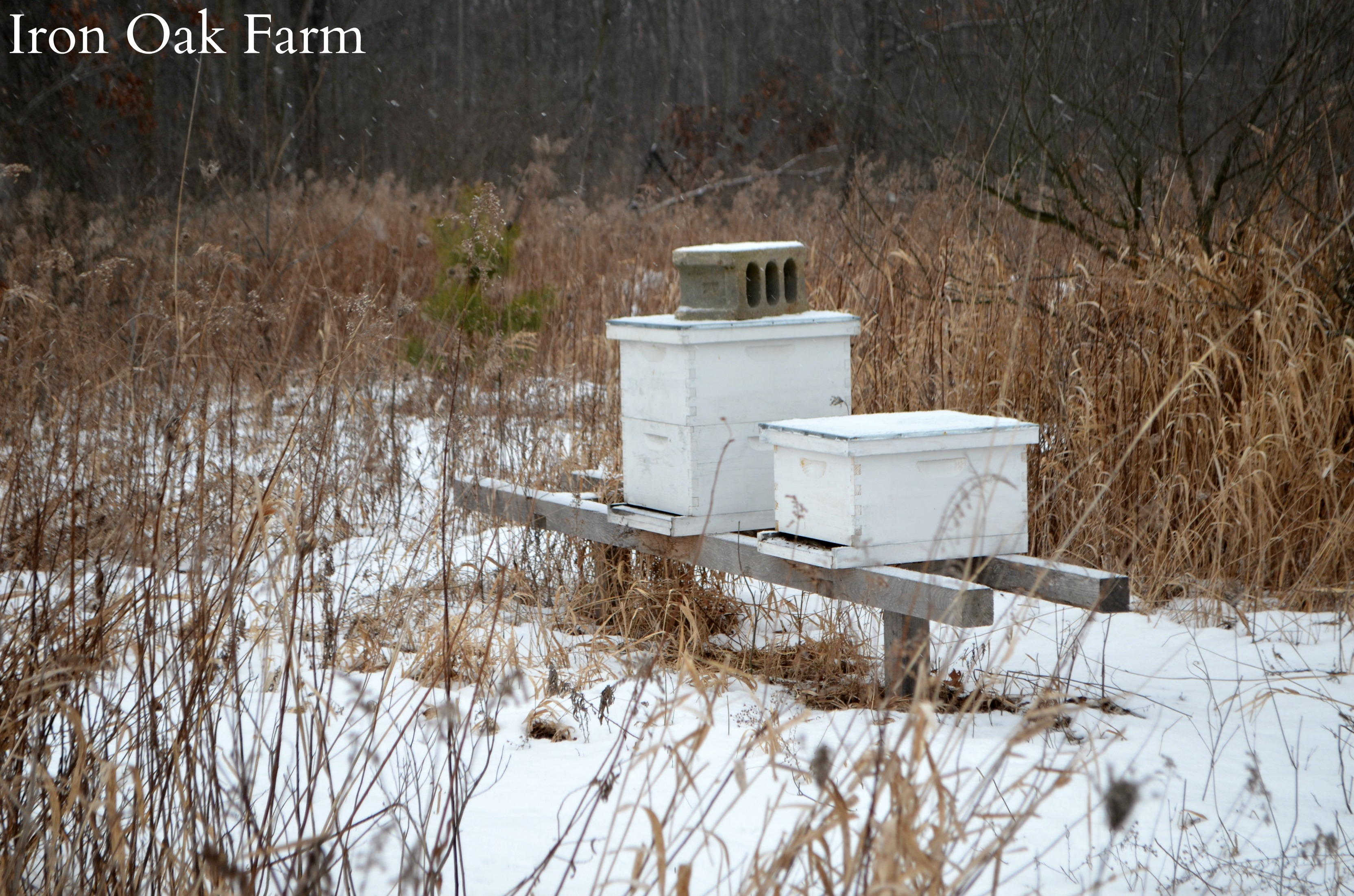 what do bees do all winter keeping backyard bees