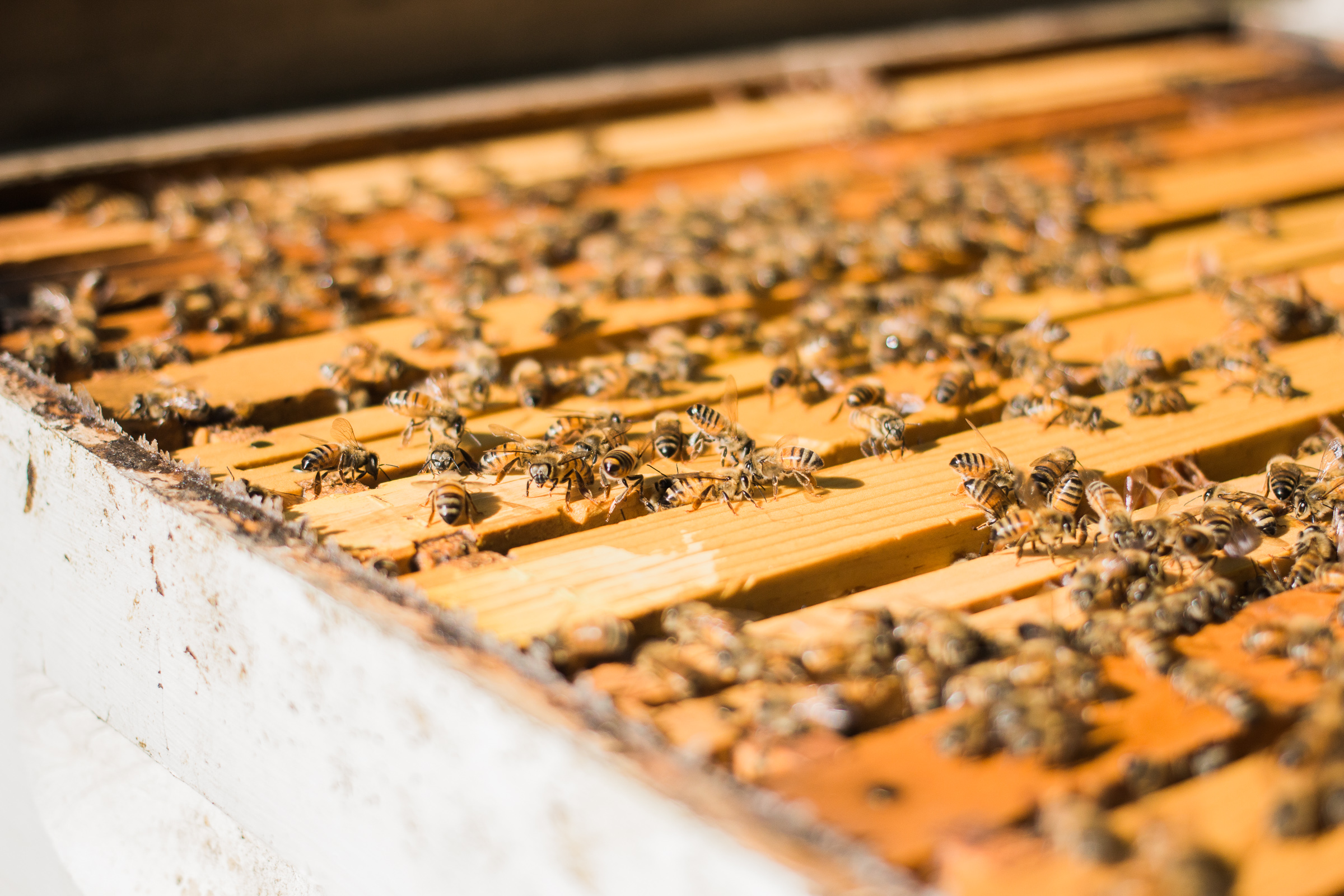 how much space does a beehive need keeping backyard bees