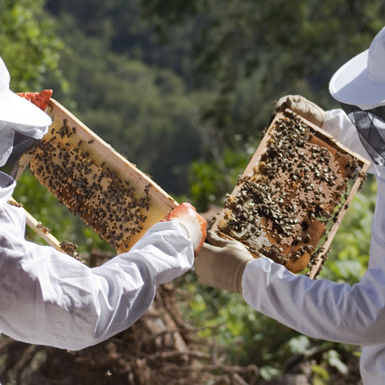 Beeginning with Bees (Podcast) Keeping Backyard Bees