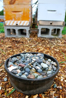water barrel with rocks for bees