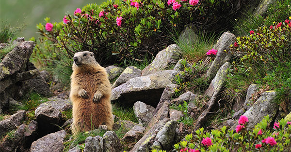 No Matter What the Groundhog Says, Here are 5 Reasons to Sell Before Spring! | Keeping Current Matters