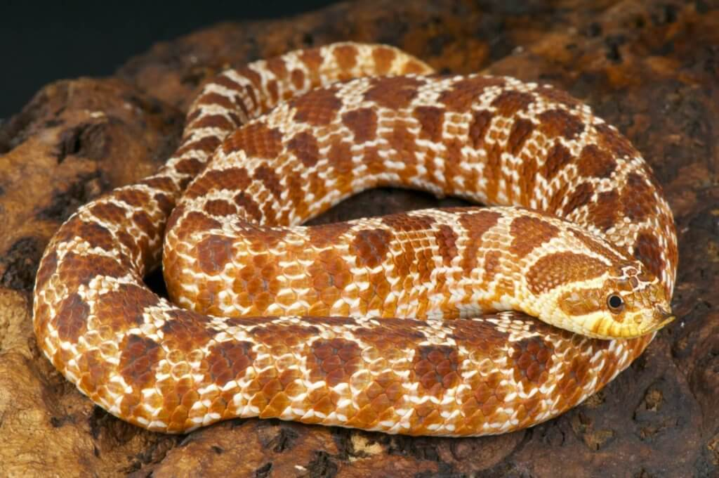 The 5 Best Small Pet Snakes (for Beginners) | Keeping ...