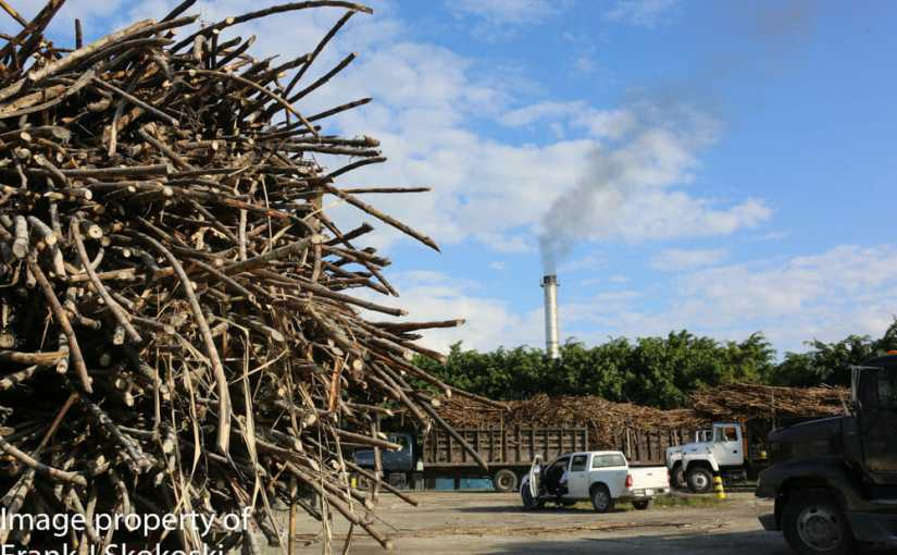 Sugar and fuel from the same plant, sugar cane. Orange Walk Belize. February 15, 2015