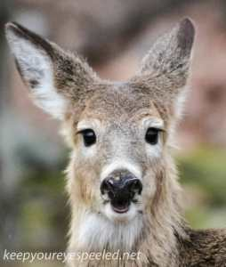 deer (4 of 5)