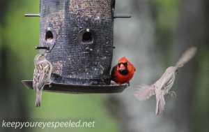 backyard feeder  2 (1 of 1)