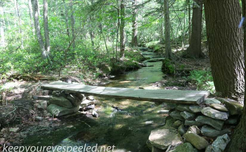 Bear Creek Preserve, Another Gem In Our Midst.