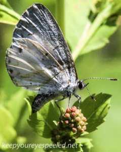 macro moth 335 (1 of 1)