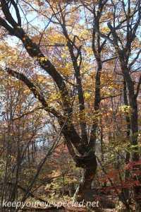 Fall hike (37 of 43)
