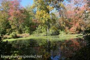 PPL Wetlands  (21 of 35)