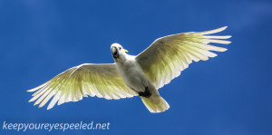 -Waverly Cemetery parrot (1 of 1)