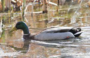 PPL Wetlands-8