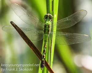 PPL Wetlands wildlife -1
