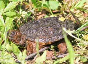 PPL Wetlands wildlife -14