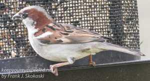 birds -22