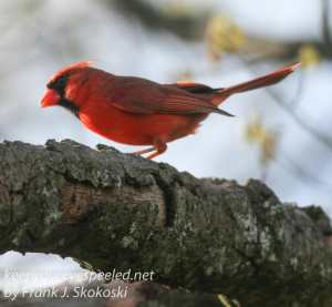 birds feeder -19