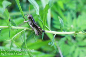 Insects -5