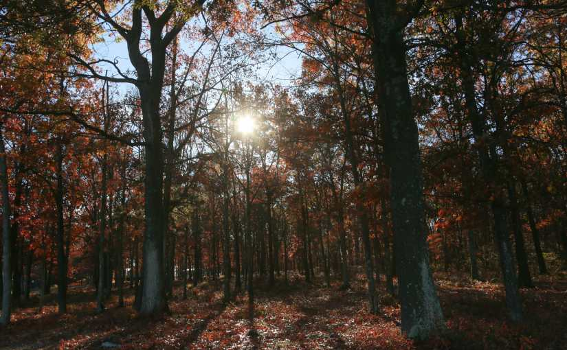 All Of Spring And Summer's Efforts Fade Away:  A  Fall Walks At Community Park