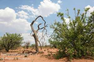 botswana-chobe-safari-landscape-11