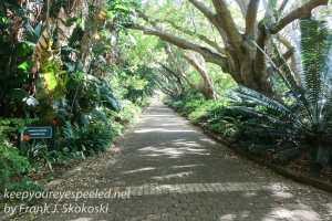 capetown-botanical-gardens-2