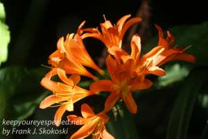 capetown-botanical-gardens-23