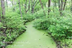 wetlands -2