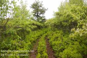 pitch pine barrens -23