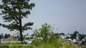 pitch pine barrens -28