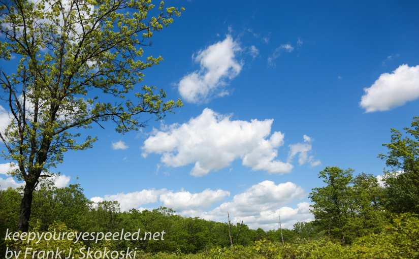 Cumulus Clouds, Wind And Sunshine: A Pleasant Birthday Hike At The Rails To Trails.