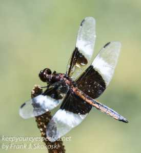 dragonfly on twig