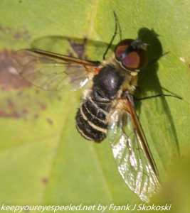 close up of wasp on leaf