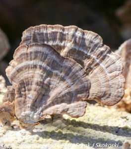 mushroom on log