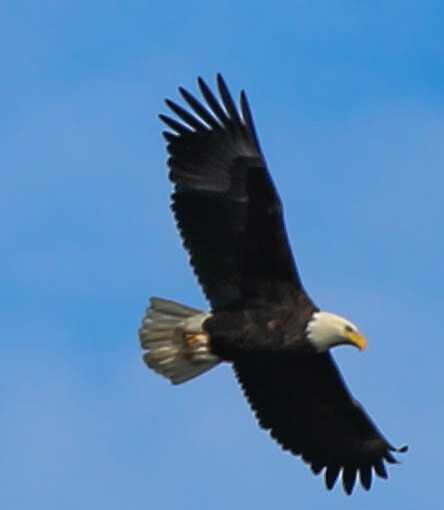 Fly Eagles Fly! And They Did, Here In Northeastern Pennsylvania And Minnesota.